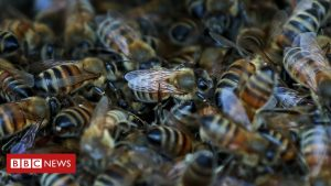 Brexit: Millions of bees could be 'destroyed' over import rules