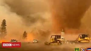 Then and now: The burning issue of wildfires